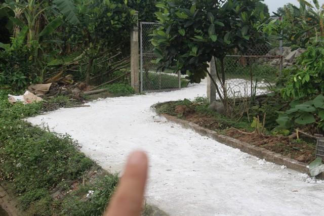 Con đường dẫn vào khu chuyển đổi của gia đình ông Trinh (thôn Nghĩa Dũng, xã Đại Đồng, huyện Tứ Kỳ) phù đầy vôi bột khử trùng