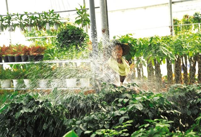 Những nhà vườn lớn luôn luôn phải thuê từ 2 – 3 thợ làm vườn.