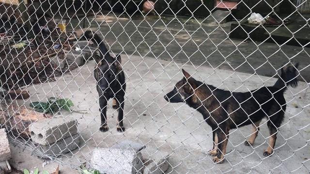 2 trong số 11 con chó của gia đình bà An.