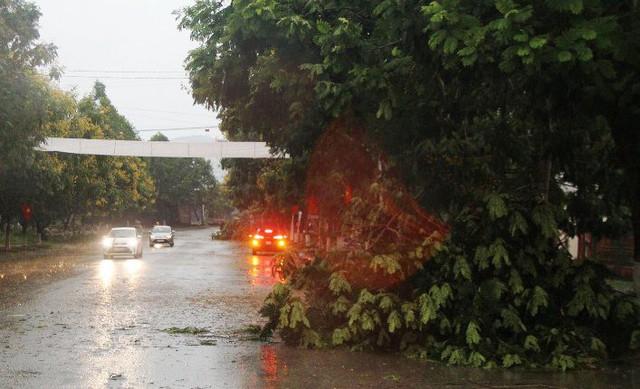 Cây xanh ngã đổ sau trận mưa đá, lốc xoáy.