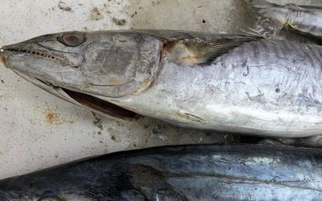 Cá biển cũng có thể nhiễm kim loại nặng như: asen, thủy ngân do môi trường ô nhiễm. Ảnh minh họa