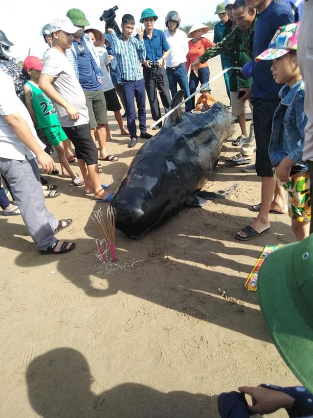 Cá voi nặng khoảng gần 1 tấn được người dân phát hiện tại bãi biển Xuân Thành.
