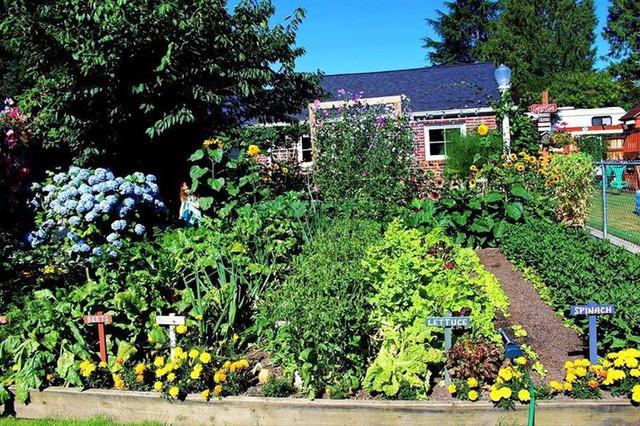 Không gian phía trước nhà đã được lấp đầy bởi các loại cây và rau.