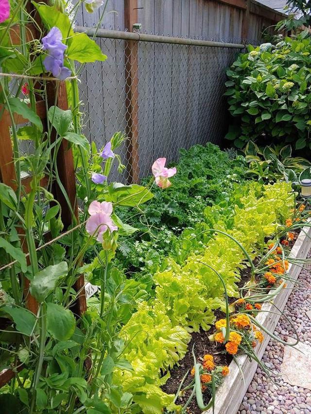 Các loại rau quả xanh mát trong vườn.