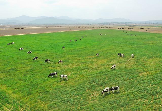 Các trang trại bò sữa Organic của Vinamilk là một trong những điểm nhấn được Hội nghị đánh giá cao