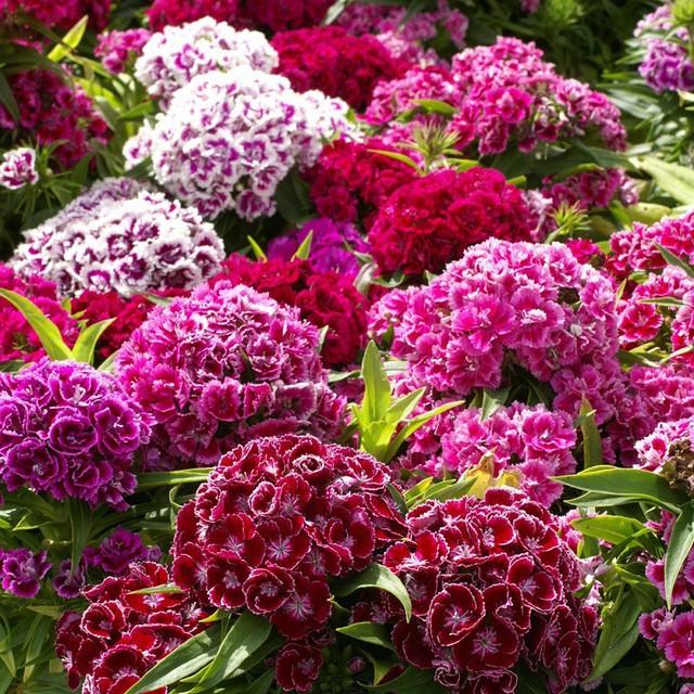 Những loài hoa tài lộc, may mắn đắt hàng nhất mùa Vu lan - Ảnh 6.