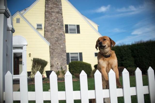 10 ý tưởng tạo hàng rào màu trắng lãng mạn cho ngôi nhà thêm ngọt ngào - Ảnh 9.