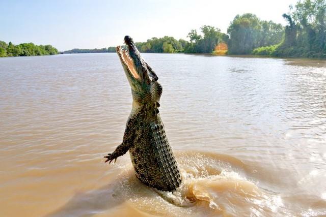 Hãi hùng khoảnh khắc bé trai 10 tuổi đang ngồi trên thuyền thì bị cá sấu lôi xuống nước ăn thịt, người nhà bất lực, chỉ lo chạy thoát thân - Ảnh 1.