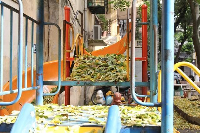 Hà Nội: Hàng sưa cổ thụ bất ngờ rụng lá, nghi bị đầu độc - Ảnh 3.