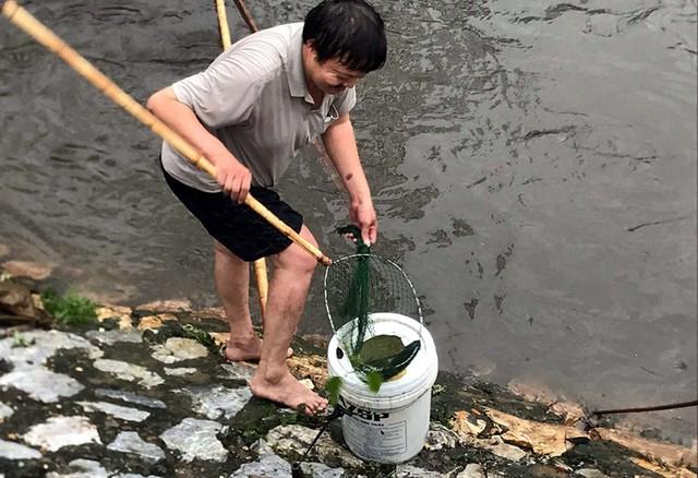 Sau mưa ngập, người Thủ đô hào hứng bắt hàng tấn cá dưới sông Kim Ngưu - Ảnh 1.
