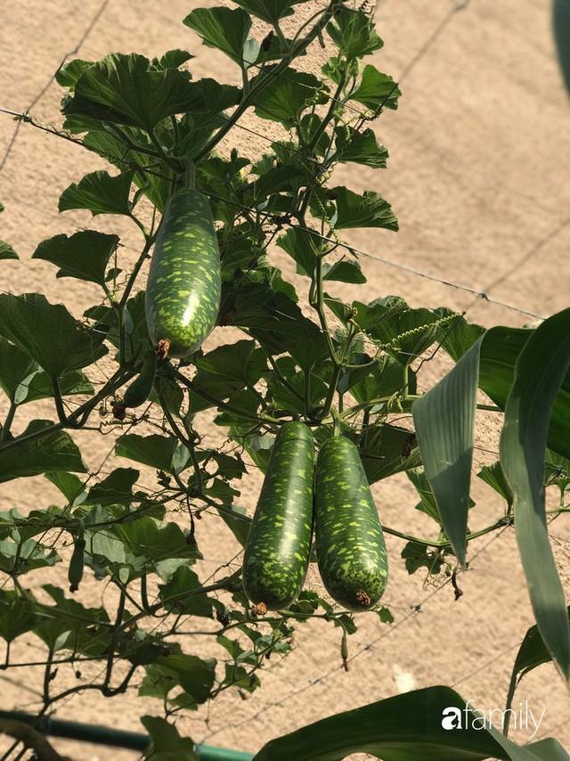 Mẹ đảm ở Czech cải tạo sân bê tông thành khu vườn với bạt ngàn rau củ quả Việt tươi tốt - Ảnh 15.