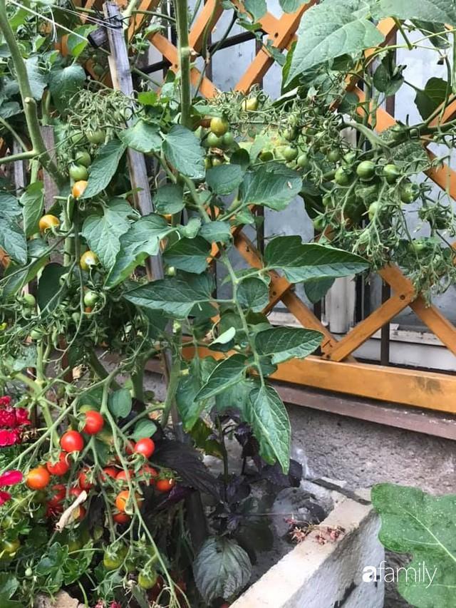 Mẹ đảm ở Czech cải tạo sân bê tông thành khu vườn với bạt ngàn rau củ quả Việt tươi tốt - Ảnh 16.