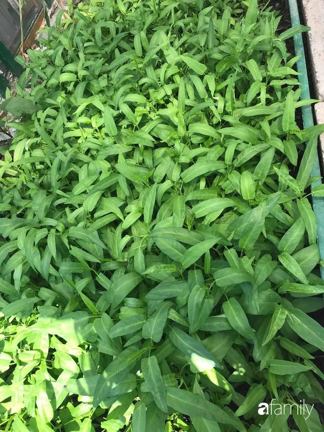 Mẹ đảm ở Czech cải tạo sân bê tông thành khu vườn với bạt ngàn rau củ quả Việt tươi tốt - Ảnh 17.