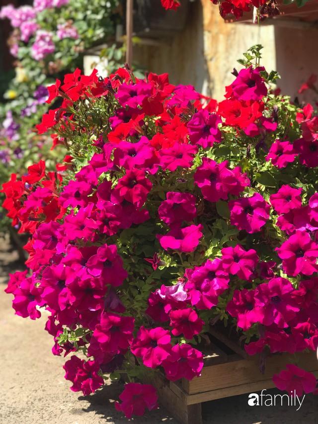 Mẹ đảm ở Czech cải tạo sân bê tông thành khu vườn với bạt ngàn rau củ quả Việt tươi tốt - Ảnh 31.