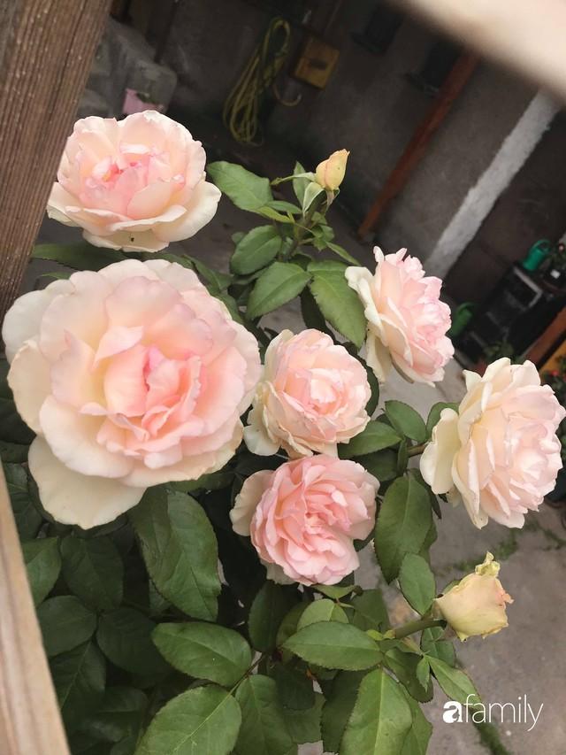 Mẹ đảm ở Czech cải tạo sân bê tông thành khu vườn với bạt ngàn rau củ quả Việt tươi tốt - Ảnh 33.