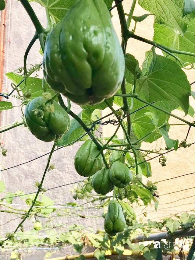 Mẹ đảm ở Czech cải tạo sân bê tông thành khu vườn với bạt ngàn rau củ quả Việt tươi tốt - Ảnh 5.
