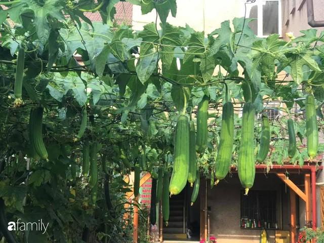 Mẹ đảm ở Czech cải tạo sân bê tông thành khu vườn với bạt ngàn rau củ quả Việt tươi tốt - Ảnh 10.