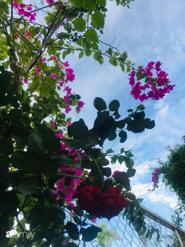 Khu vườn 30m² muôn hoa đua nở trên sân thượng của mẹ đảm thích mộng mơ ở TP. HCM - Ảnh 2.