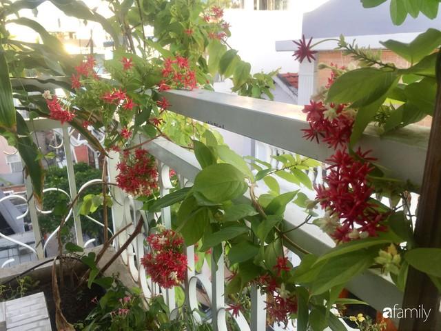 Khu vườn 30m² muôn hoa đua nở trên sân thượng của mẹ đảm thích mộng mơ ở TP. HCM - Ảnh 14.