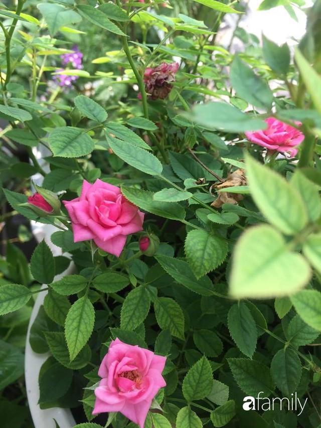 Khu vườn 30m² muôn hoa đua nở trên sân thượng của mẹ đảm thích mộng mơ ở TP. HCM - Ảnh 23.