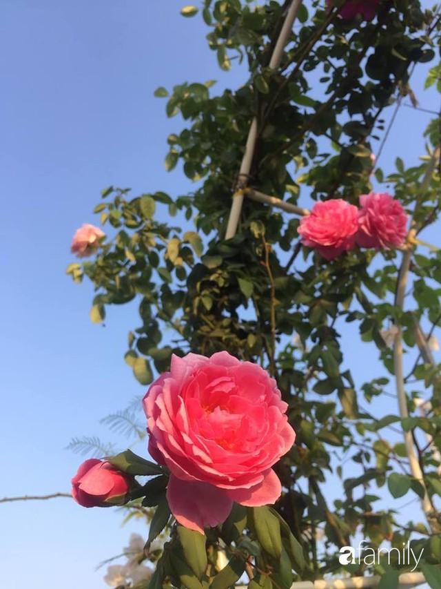 Khu vườn 30m² muôn hoa đua nở trên sân thượng của mẹ đảm thích mộng mơ ở TP. HCM - Ảnh 25.