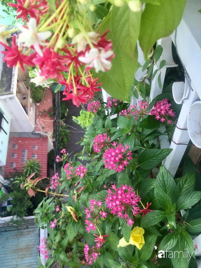 Khu vườn 30m² muôn hoa đua nở trên sân thượng của mẹ đảm thích mộng mơ ở TP. HCM - Ảnh 8.