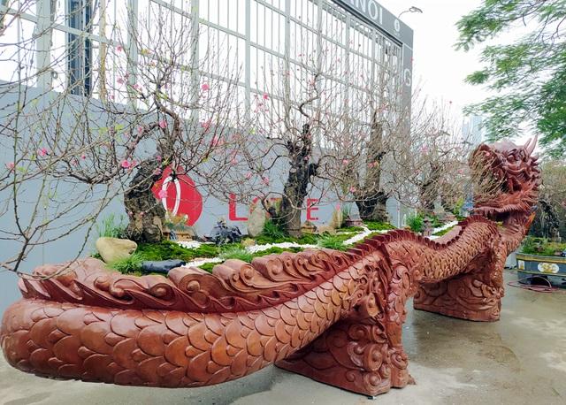Video: Mục sở thị chậu đào khủng nằm trên mình rồng giá hơn 1 tỷ đồng ở Hà Nội - Ảnh 2.