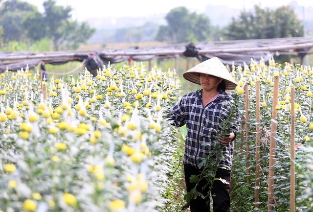 """Vựa hoa lớn nhất Hà Nội """"nín thở"""" chờ Tết - Ảnh 1."""
