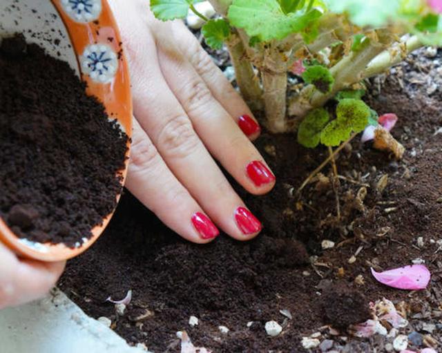 Không cần tốn tiền đi mua phân bón, vườn cây của bạn sẽ tốt vù vù với những thực phẩm bỏ đi trong nhà bếp này - Ảnh 4.