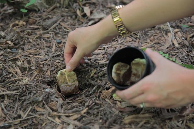 Không cần tốn tiền đi mua phân bón, vườn cây của bạn sẽ tốt vù vù với những thực phẩm bỏ đi trong nhà bếp này - Ảnh 7.