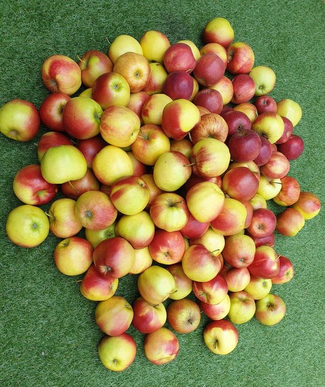 Cách làm táo sấy cực dễ giúp chị em ăn vặt cả ngày không lo tăng cân, bảo sao hot xình xịch thế này! - Ảnh 3.