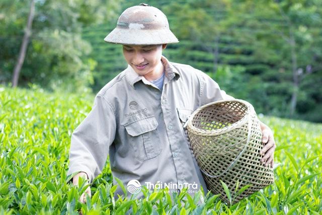 Chàng kỹ sư công nghệ khai sinh một thương hiệu trà sạch sản xuất thủ công - Ảnh 2.