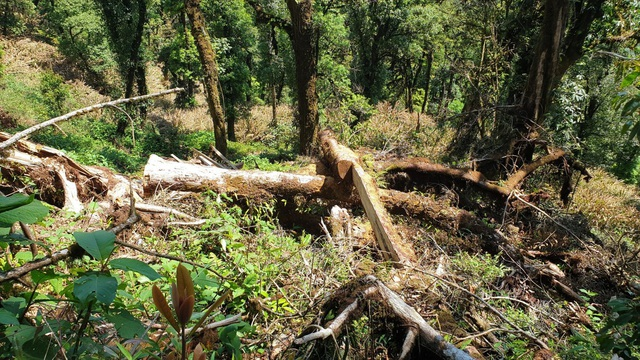 """Yên Bái: Khu bảo tồn loài sinh vật cảnh """"chảy máu"""", gỗ quý bị chặt hạ, xẻ hộp la liệt - Ảnh 2."""