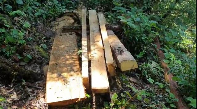 """Yên Bái: Khu bảo tồn loài sinh vật cảnh """"chảy máu"""", gỗ quý bị chặt hạ, xẻ hộp la liệt - Ảnh 4."""
