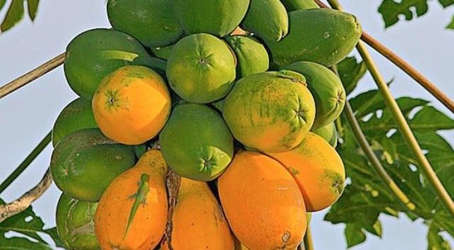 Ung thư đại tràng là ung thư phổ biến hàng thứ 5, hãy ăn loại quả này mỗi ngày để ngăn ngừa nó - Ảnh 2.