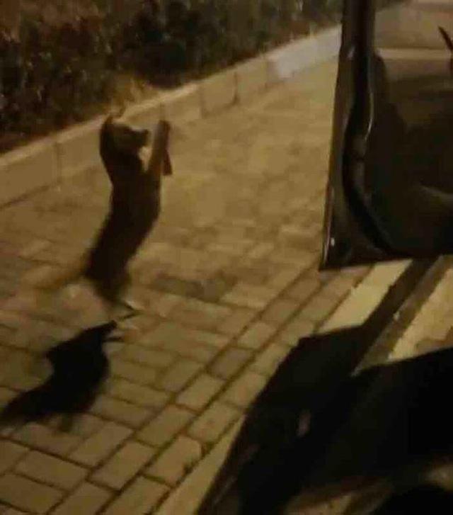 سگ هنگام تغذیه توسط عابر پیاده اشک می ریزد ، اما از سوار شدن در ماشین امتناع می کند ، دلیل پشیمانی همه - عکس 2.