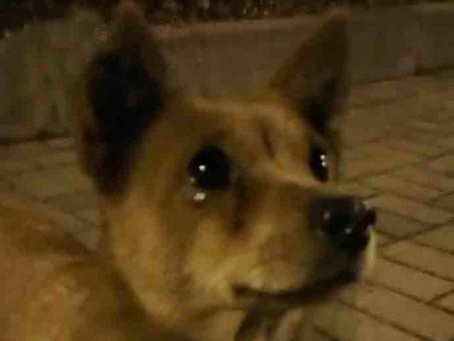 سگ هنگام تغذیه توسط عابر پیاده اشک ریخت ، اما از سوار شدن در اتومبیل امتناع کرد ، دلیل پشیمانی همه - عکس 3.