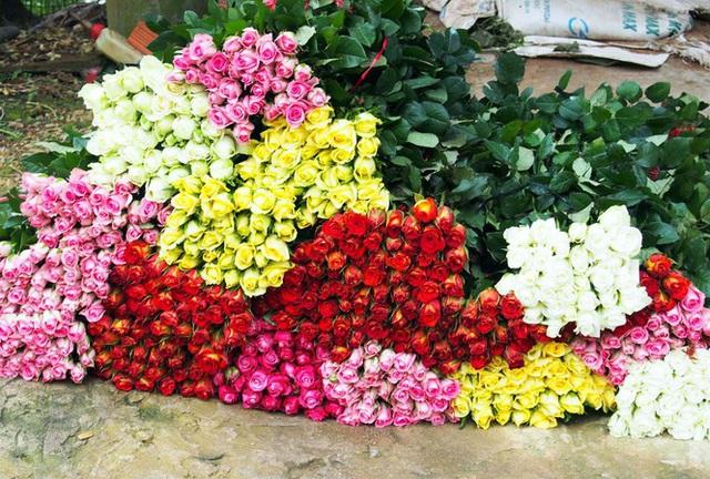 Chuẩn bị hoa bán 8/3: Hoa hồng Đà Lạt chỉ mong bán được 3.000 đồng/bông vì COVID-19 - Ảnh 2.