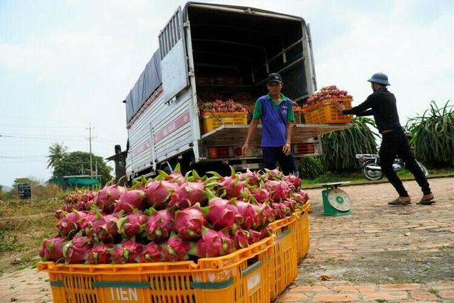 Nông sản Việt kêu cứu vì virus corona - Ảnh 3.