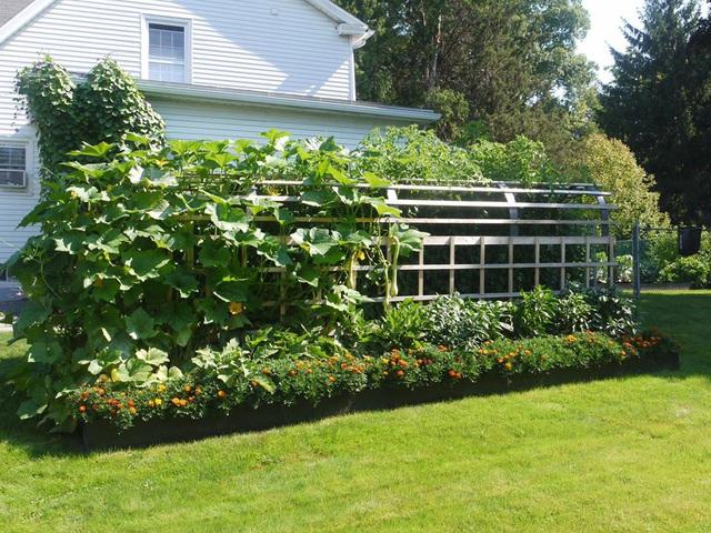 Khu vườn đủ loại rau quả đẹp như tranh của người phụ nữ trồng trọt từ năm 16 tuổi đến 63 tuổi - Ảnh 3.