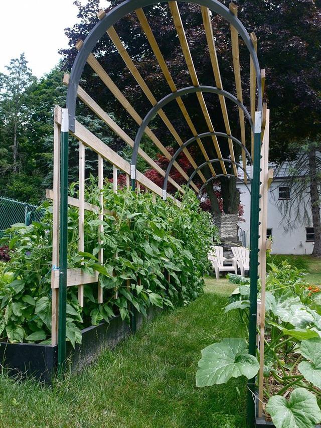 Khu vườn đủ loại rau quả đẹp như tranh của người phụ nữ trồng trọt từ năm 16 tuổi đến 63 tuổi - Ảnh 12.