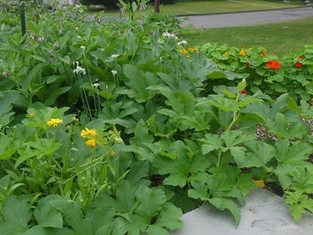 Khu vườn đủ loại rau quả đẹp như tranh của người phụ nữ trồng trọt từ năm 16 tuổi đến 63 tuổi - Ảnh 4.