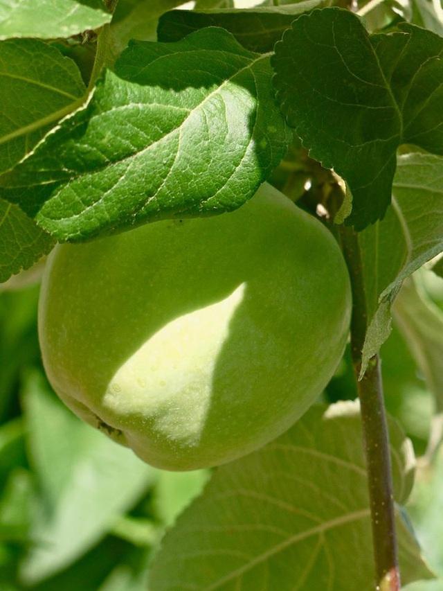 Khu vườn đủ loại rau quả đẹp như tranh của người phụ nữ trồng trọt từ năm 16 tuổi đến 63 tuổi - Ảnh 25.
