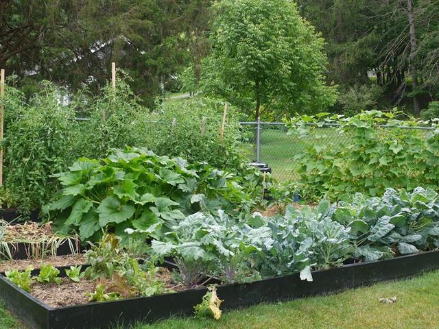 Khu vườn đủ loại rau quả đẹp như tranh của người phụ nữ trồng trọt từ năm 16 tuổi đến 63 tuổi - Ảnh 7.