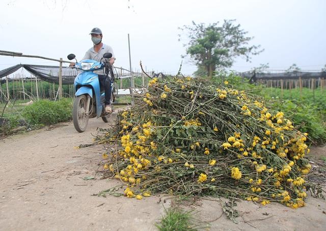 Không tìm được nơi tiêu thụ, nông dân Tây Tựu ngậm ngùi vứt bỏ hoa đầy ruộng - Ảnh 10.