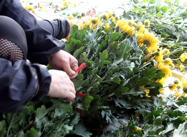 Không tìm được nơi tiêu thụ, nông dân Tây Tựu ngậm ngùi vứt bỏ hoa đầy ruộng - Ảnh 14.