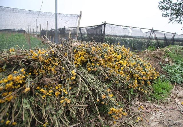 Không tìm được nơi tiêu thụ, nông dân Tây Tựu ngậm ngùi vứt bỏ hoa đầy ruộng - Ảnh 12.