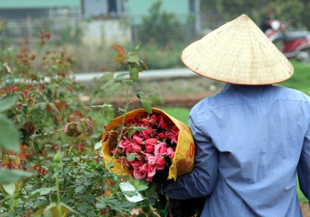 Hà Nội: Hoa tươi rẻ chạm đáy, nhiều nông dân Tây Tựu thua lỗ - Ảnh 3.