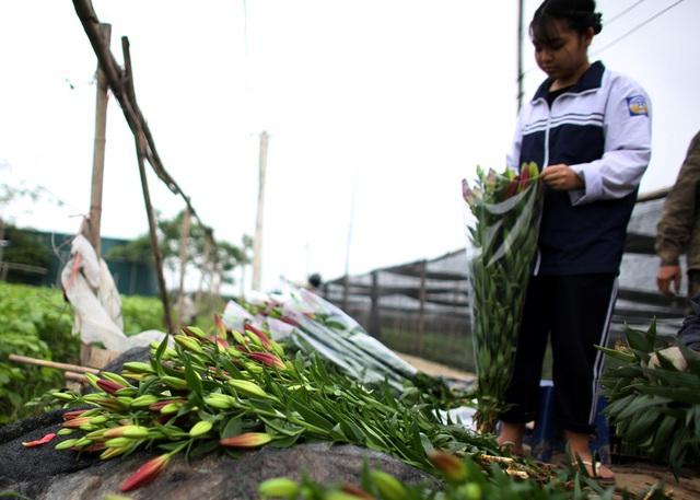 Hà Nội: Hoa tươi rẻ chạm đáy, nhiều nông dân Tây Tựu thua lỗ - Ảnh 4.