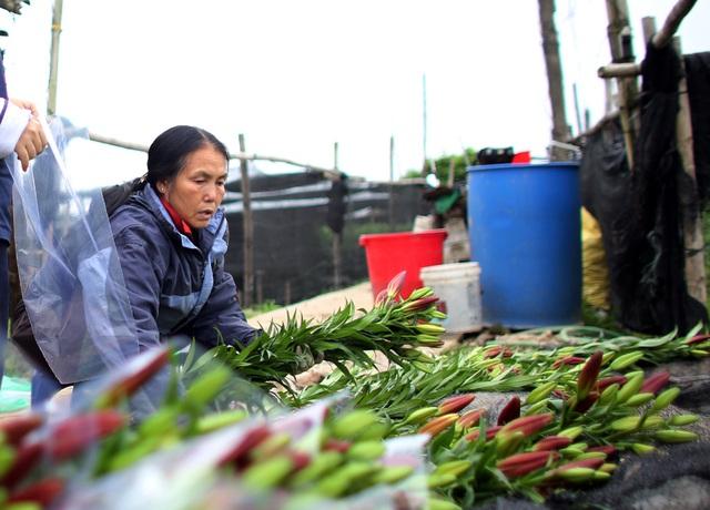 Hà Nội: Hoa tươi rẻ chạm đáy, nhiều nông dân Tây Tựu thua lỗ - Ảnh 5.